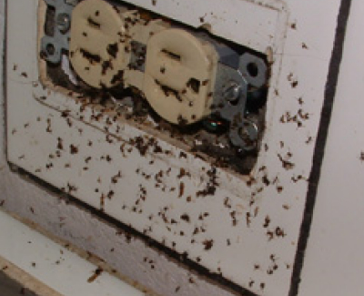 get rid of the pests on your home 1