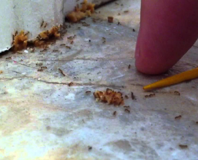 get rid of the pests on your home 3