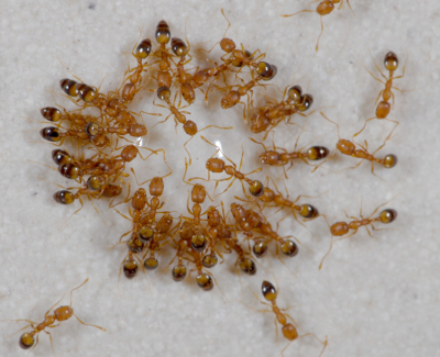 get rid of the pests on your home 4