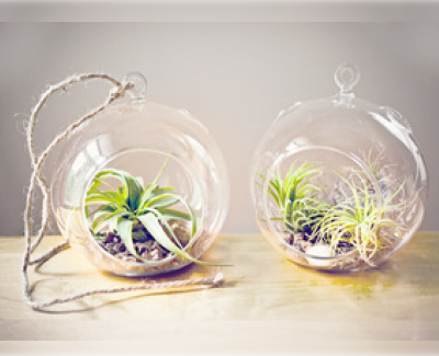 air_plants_in_glass