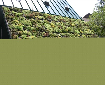Difference Between Cool Roofs and Green Roofs3