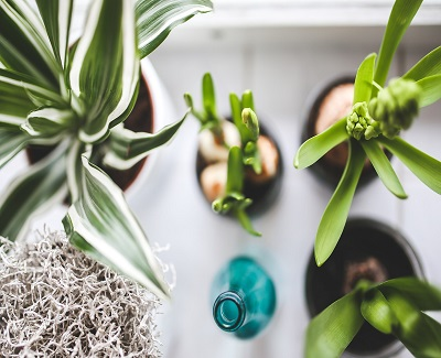 7 ways to green your home1
