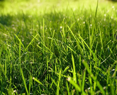 green spots in your lawn