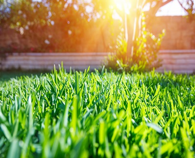tips for healthy lawn