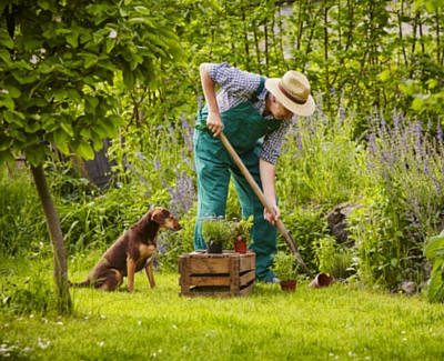 make your garden friendlier for your dog