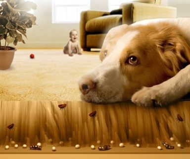 how-to-get-rid-of-fleas-in-your-house