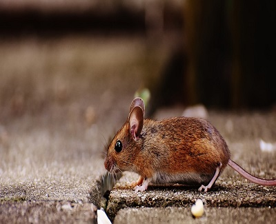 8-different-local-pest-control-method-we-should-apply-at-home