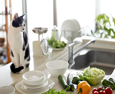 how-to-make-sure-your-home-is-pet-friendly1