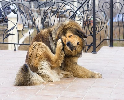 how-to-get-rid-of-pet-hair1