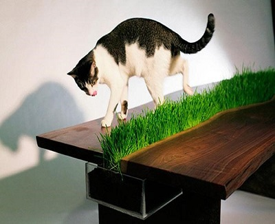 pet-friendly-furniture-for-animal-lovers