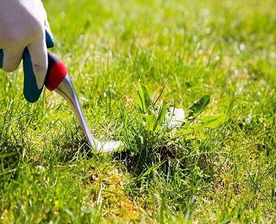 4-tips-on-maintaining-your-yard2