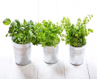 best-potted-planst-for-patio-herbs