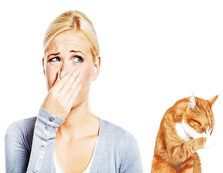 How can you get rid of cat urine smell