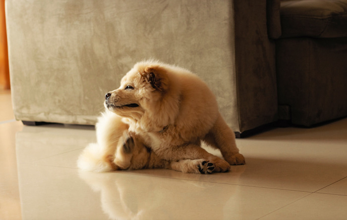 how to prevent fleas on pets