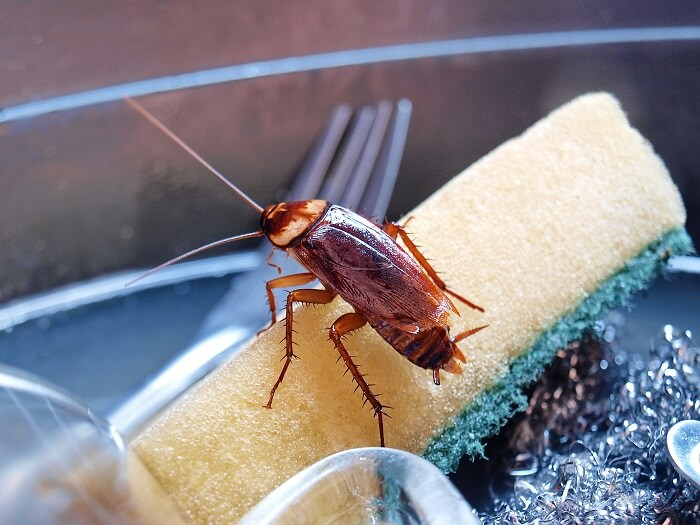 Methods to Get Rid of Cockroaches for Good